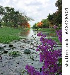 Tropical Public Canal In...