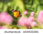 Butterfly And Globe Amaranth...