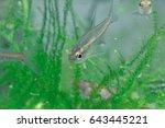aquarium fish in china | Shutterstock . vector #643445221