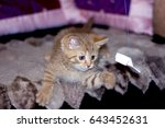 Stock photo small striped ginger kitten playing with bow 643452631