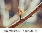 flower in greenhouse | Shutterstock . vector #643468321
