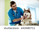 sick husky lying on table in... | Shutterstock . vector #643480711
