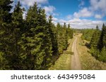 Areal View To Forest In Scotland