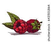 vector raspberry isolated on... | Shutterstock .eps vector #643501864