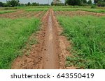 weed infestation in agriculture ...   Shutterstock . vector #643550419