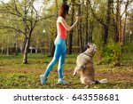 Stock photo labrador performs commands of girl 643558681