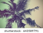 coconut tree with gradient...   Shutterstock . vector #643589791