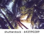 tropical palm leaf on sunset... | Shutterstock . vector #643590289