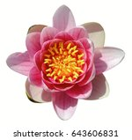 pink lotus isolated on white... | Shutterstock . vector #643606831