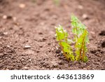 crops planted in rich soil get... | Shutterstock . vector #643613869
