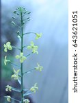 macro shooting flowers of...   Shutterstock . vector #643621051