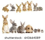 Stock photo rabbit and the hamster looks 643664089