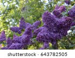 lilac | Shutterstock . vector #643782505