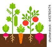vegetable garden  simple flat... | Shutterstock . vector #643783474