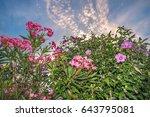 Flowering Oleander With Hibiscus