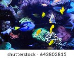 Dory Fish  Palette Surgeonfish...