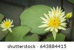 lotus in park will blooming. | Shutterstock . vector #643884415