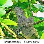 Illustration Of Green Iguana ...