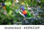 rainbow lorikeet hang on a... | Shutterstock . vector #643962169