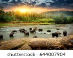 Stock photo herd of elephants bathing in the jungle river of sri lanka 644007904