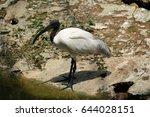 african pelican   Shutterstock . vector #644028151