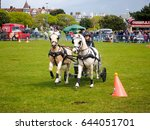 Small photo of 01 May 2017, Portsmouth England. Two Ponies pull a Scurry during a Scurry racing event held in a public park