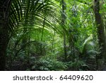 Tropical Jungle Forest.natural...