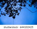 Silhouettes Of Bougainvillea...