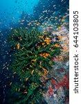 beautiful healthy coral reef...   Shutterstock . vector #644103805