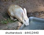 Rabbit Drinking Water In The Zoo