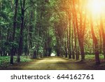 beautiful green forest with... | Shutterstock . vector #644162761