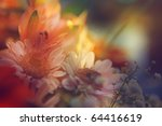 flowers in color filters. floral abstract backgrounds - stock photo