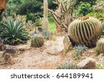 Small photo of Cactus in a desert landscape. C?actus in flower park in Dalat city, South Central Highlands of Vietnam