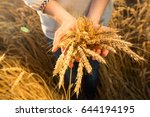 Small photo of the woman in a national white shirt holds in hand the ripened wheat ears on a gold field background. harvest, agriculture, agronomics, food, production, eco concept.
