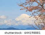 sakura cherry blossom close up... | Shutterstock . vector #644198881