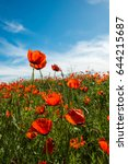 natural flower background.... | Shutterstock . vector #644215687
