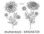 dahlia flowers drawing and... | Shutterstock .eps vector #644246725
