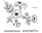 wild rose flowers drawing and... | Shutterstock .eps vector #644246974