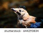 cute bird eurasian jay portrait....   Shutterstock . vector #644293834