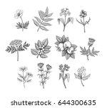 vintage vector field flowers... | Shutterstock .eps vector #644300635
