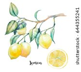watercolor lemon illustration.... | Shutterstock . vector #644355241