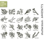 hand drawn vector set of herbs... | Shutterstock .eps vector #644356771
