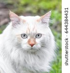portrait of a cat breed turkish ... | Shutterstock . vector #644384431