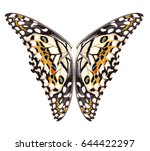 butterfly isolated on white... | Shutterstock . vector #644422297