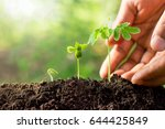 three seedlings are growing... | Shutterstock . vector #644425849
