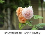 beautiful yellow  pink  and... | Shutterstock . vector #644448259