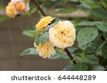 beautiful yellow  pink  and... | Shutterstock . vector #644448289