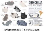 chinchilla breeds icon set flat ... | Shutterstock .eps vector #644482525