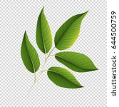 green leaves on transparent... | Shutterstock .eps vector #644500759