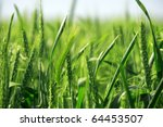A Background Image Of Green...